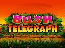 bush-telegraph logo
